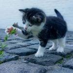 W jakie meble dla kota warto się zaopatrzyć?